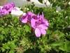 Flora in Spain